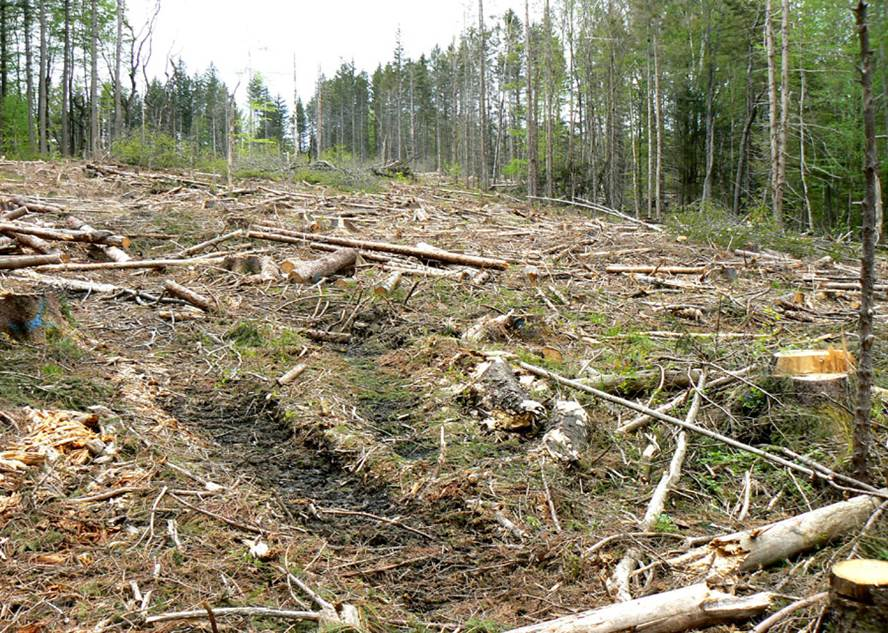 PROTECT NEW ENGLAND FORESTS on